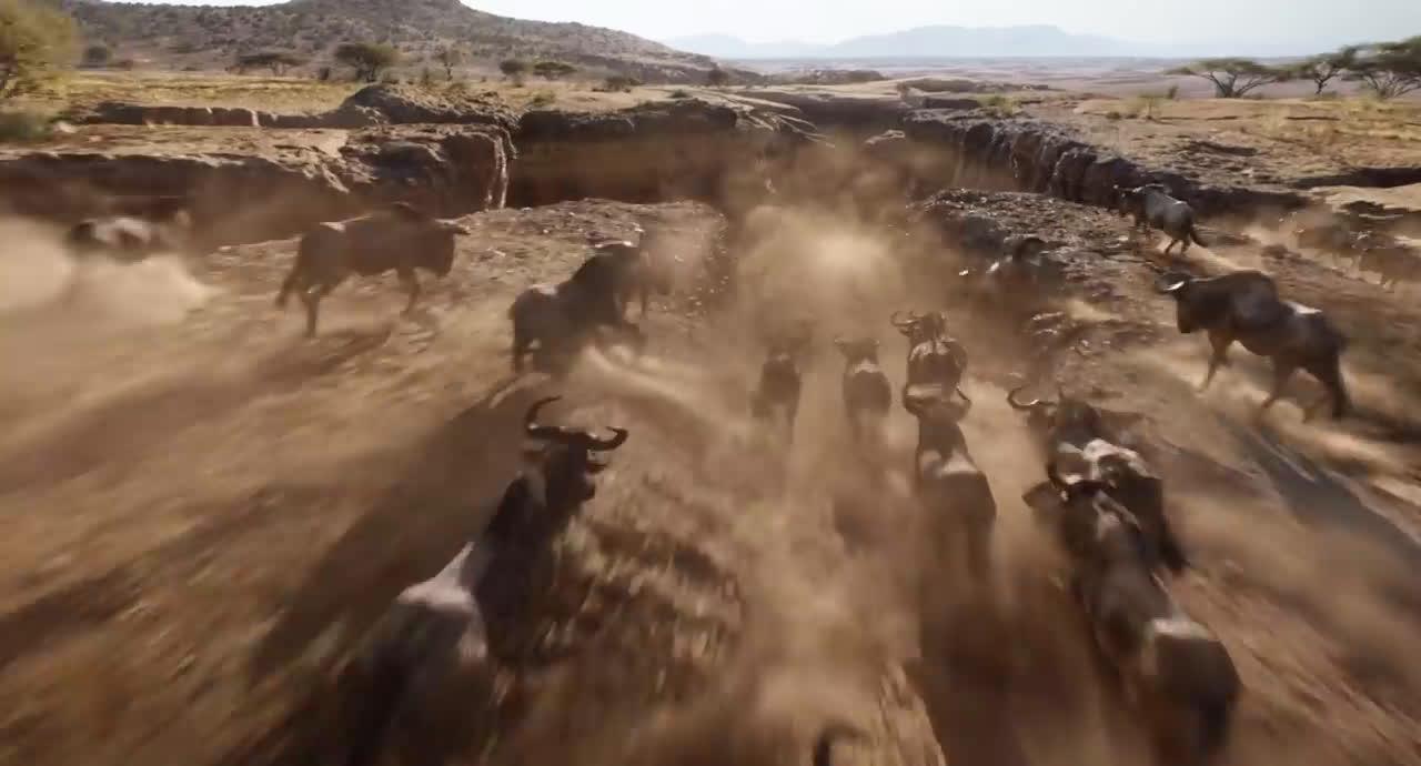 Disney The Lion King Official Trailer anuncio