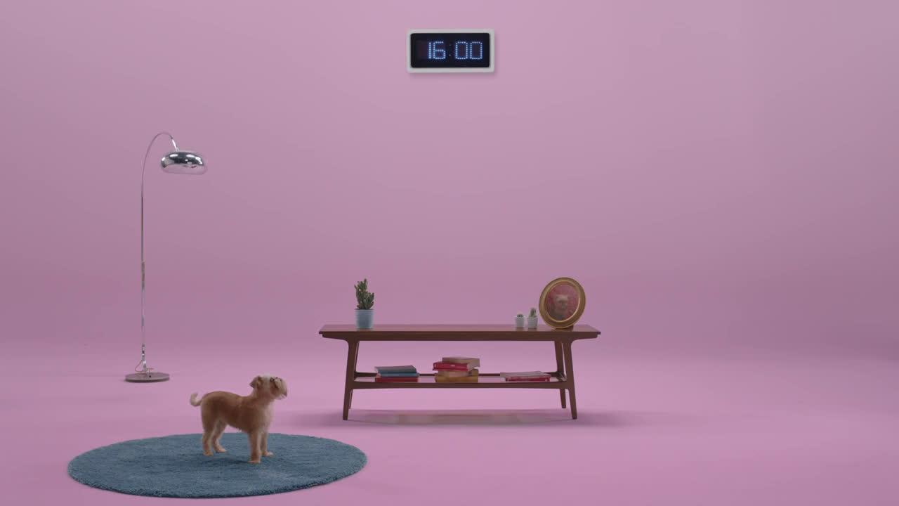 Cornetto El perro de Cornetto anuncio