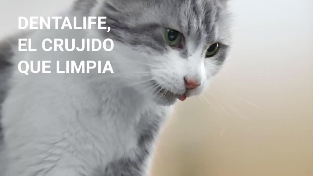 Purina Dentalife® para Gatos anuncio
