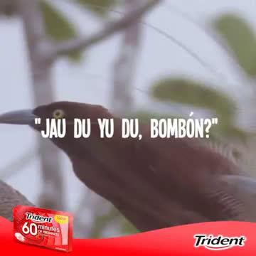 Trident GUIRI HUNTERS anuncio