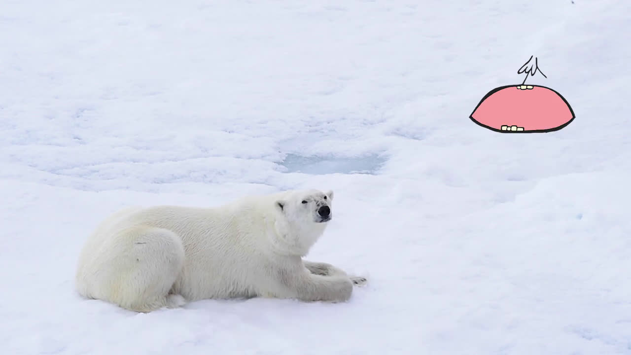Mixta #MadreNaturaleza | Oso Polar anuncio